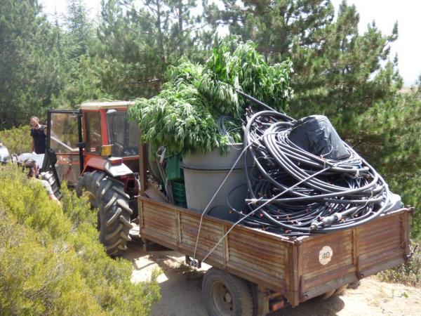 Il business della marijuana di casa in sardegna for Planimetrie della casa di piantagione