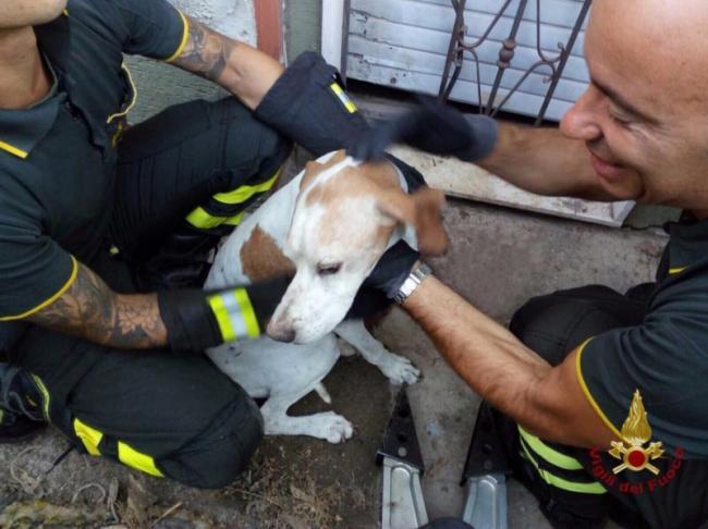 Incastrato per ore in una ringhiera, cane salvato in extremis dai Vigili del fuoco a Quartu