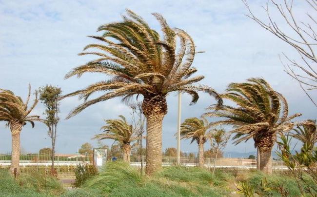 Cagliari, vento troppo forte: chiusi parchi e cimiteri